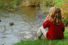Girl feeding ducks Royalty Free Stock Photos
