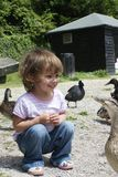 Girl feeding ducks Royalty Free Stock Photo