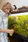 Girl feeding fish in aquarium. At home Royalty Free Stock Image