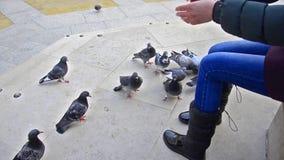 Girl feeding flock of pigeons stock video