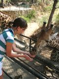 Girl feeding giraffes Royalty Free Stock Image