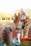 Cute little girl feeding giraffes in Africa. Girl feeding giraffes in Africa Royalty Free Stock Photos