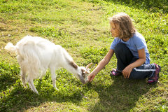 Girl Feeding Goat 2 Royalty Free Stock Image