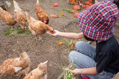 Girl feeding grain to hen by hand Royalty Free Stock Photo