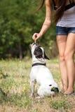 Girl feeding her bulldog Royalty Free Stock Photography