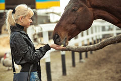 Girl feeding  her horse Royalty Free Stock Images