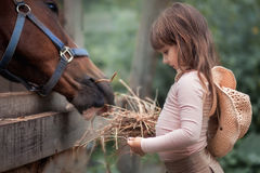 Girl feeding her horse. Cute girl feeding her horse in paddock Royalty Free Stock Photos