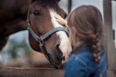 Girl feeding her horse. Cute girl feeding her horse in paddock Royalty Free Stock Photography
