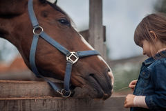 Girl feeding her horse. Cute girl feeding her horse in paddock Stock Photography