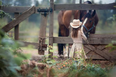 Girl feeding her horse. Cute girl feeding her horse in paddock Royalty Free Stock Images