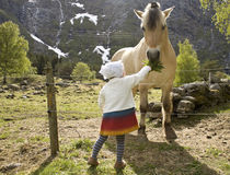 Girl feeding horse. Little girl (2 years old) reaching up to a Norwegian Fjord Horse with a bouquet of dandelion leaves Royalty Free Stock Images