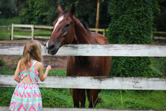 Girl Feeding Horse Stock Image