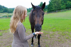 Girl feeding the horse. Young girl feeding the horse a carrot on the meadow Royalty Free Stock Image