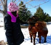 A girl feeding horses. A young girl feeding horses Royalty Free Stock Image