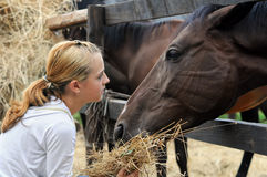 Girl feeding horses Royalty Free Stock Photos