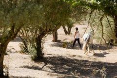 Girl feeding horses Royalty Free Stock Image