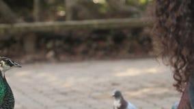 Girl feeding Indian Peafowl stock footage