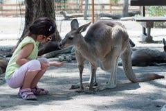 Girl feeding kangaroos at the zoo in Israel Stock Photo