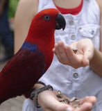 Girl feeding parrot Royalty Free Stock Photos