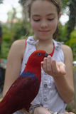 Girl feeding a parrot. Portrait of a young girl feeding a parrot from her hand Royalty Free Stock Photography