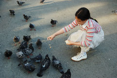 Girl feeding pigeons Royalty Free Stock Photography