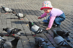 Girl feeding pigeons Royalty Free Stock Photo