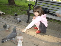 Girl feeding pigeons Stock Images