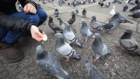Girl feeding pigeons stock video footage