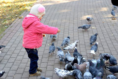 Girl feeding pigeons. Little girl four years in a pink jacket and hat with pompoms feeding birds (pigeons) bread in a city park in autumn Stock Photos