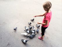 Girl feeding the pigeons Royalty Free Stock Photography