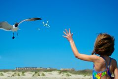 Young Girl Feeding a Seagull. Girl Feeding Popcorn to a Seagull Royalty Free Stock Image
