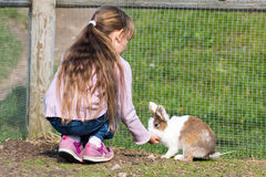 Girl feeding rabbit Stock Photo