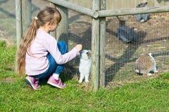 Girl feeding rabbit Stock Photo