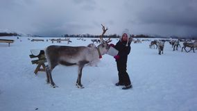 Girl feeding reindeer in the winter
