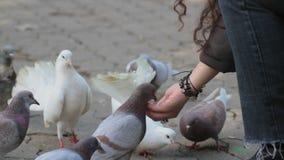 Girl feeding rock doves stock footage