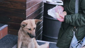 Girl feeding the stray dog at street stile. Stray dogs on street makes fear people stock footage