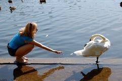 Girl feeding swan Stock Image