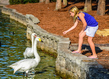 Free Girl Feeding Swans Stock Photo - 79017700