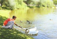 Girl feeding swans lake shore park royalty free stock image