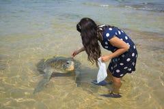Girl feeds algae sea turtle. Sri Lanka Stock Image