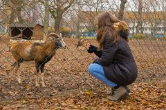 Girl feeds animals. In the park Stock Photography