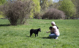 The girl feeds the black dog. Young mother with her son helps homeless dog in the park Royalty Free Stock Photography
