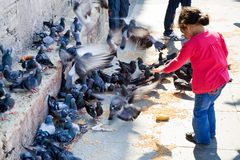 Girl feeds doves near wall of Mosque Stock Image
