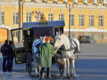 Girl feeds-drawn carriage horse on the Palace square in Saint-Pe Stock Photos