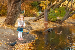 The girl feeds ducks and pigeons Royalty Free Stock Images