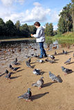 Girl feeds ducks and pigeons birds on the shore of the pond Stock Images