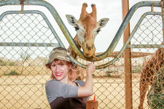 Woman feeding giraffe Royalty Free Stock Images