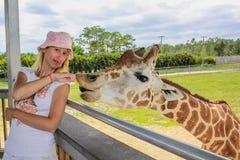 Woman touching giraffe Royalty Free Stock Photography