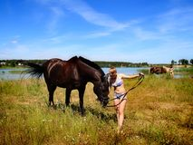 The girl feeds a horse meadow grass. Royalty Free Stock Photography