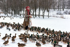 Girl feeds a lot of ducks. A lot of hungry ducks wintering Royalty Free Stock Images